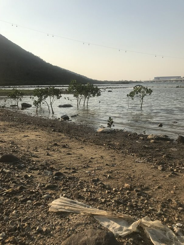 Tung Chung Bay Mangrove clean-up - 17th (Saturday), 3pm-5pm, August, 2019